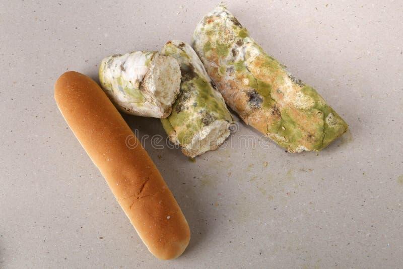 Molde no pão O melhor antes da data tem expirado há muito tempo com este alimento mofado Espaço para o texto foto de stock