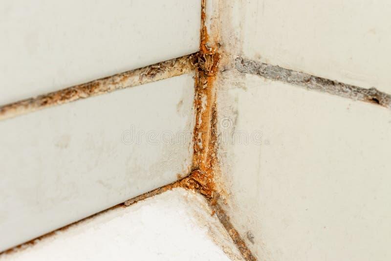 Molde o fungo e a oxida??o que crescem em jun??es da telha no banheiro mal ventilado ?mido com umidade alta, wtness, umidade e um imagens de stock