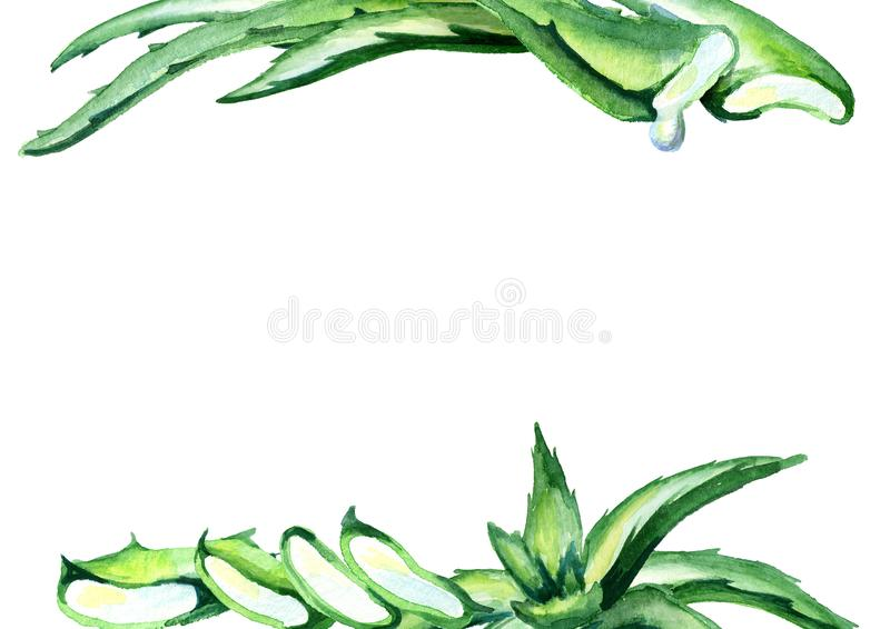 Molde orgânico de vera do aloés Fundo desenhado mão da aguarela ilustração stock