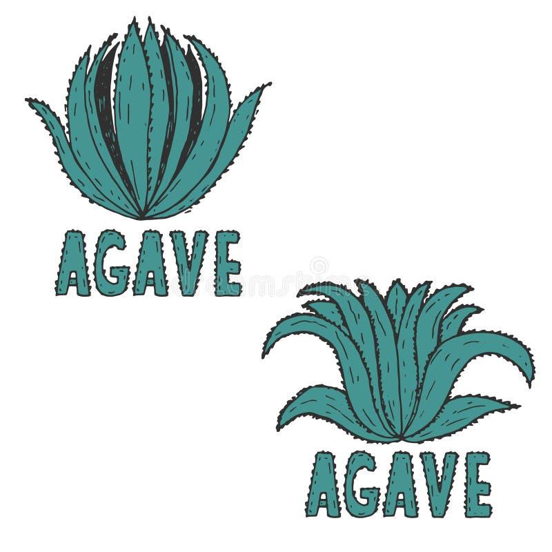 molde tirado da ilustração da agave Vetor ilustração stock