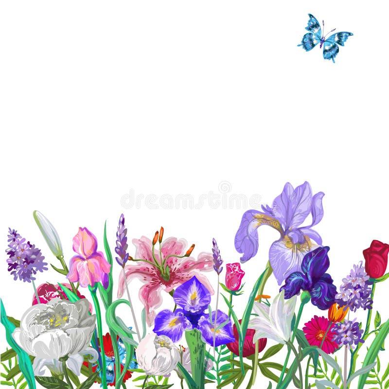 Molde vazio floral macio com borboleta, projeto tirado mão do vetor no branco ilustração stock