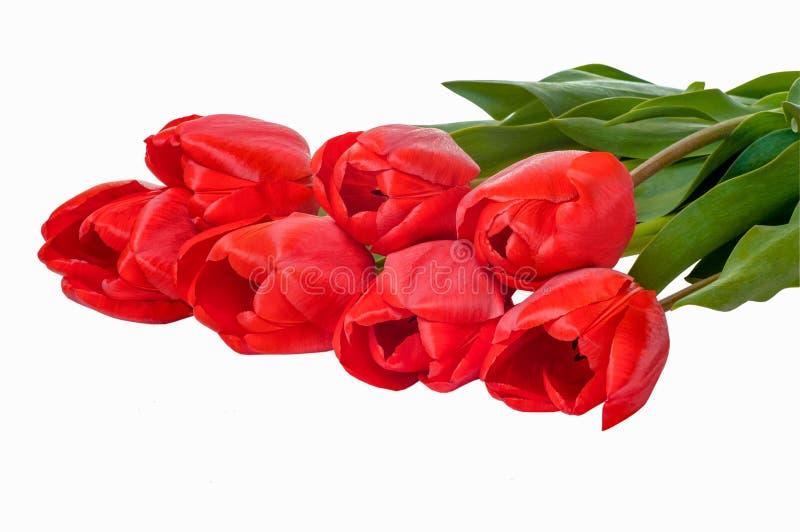 Molde vazio para o projeto festivo sazonal, cartazes da mola, cumprimentos, cartões Flores vermelhas das tulipas em um fundo bran fotos de stock royalty free