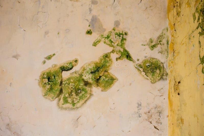 Molde verde-claro em um teto fotos de stock