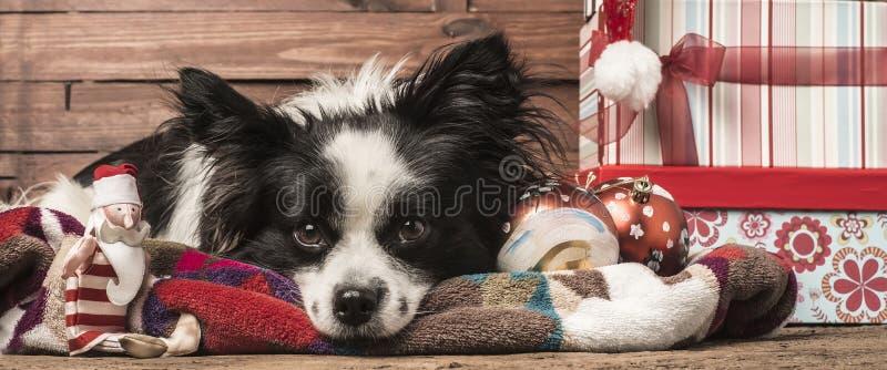 Moldes do cumprimento do Natal dos cães foto de stock royalty free