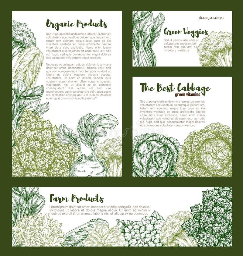 Moldes do vetor dos vegetais das couves ajustados ilustração stock