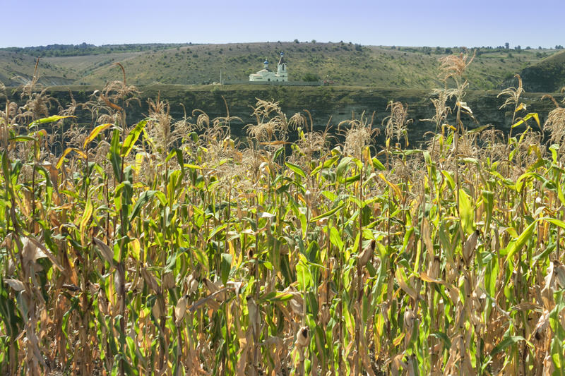 Moldova, Orhei Vechi, corn field and church royalty free stock photos