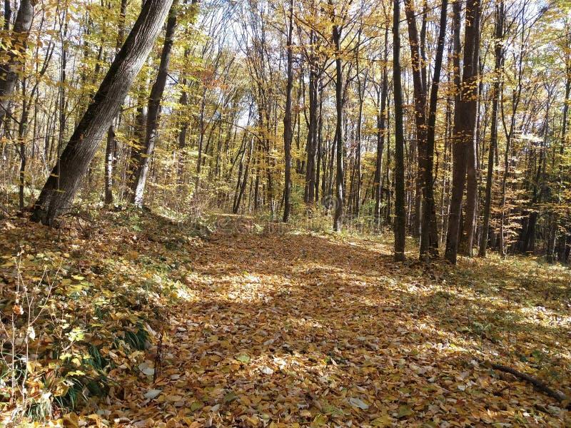 Moldovan Wälder stockbilder