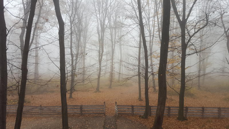 Moldovei de codrii de forêt photos libres de droits