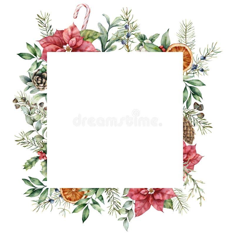Moldura de Natal com decor de poinsettia Cartão de abeto pintado à mão com folhas, pinos em cones, colly, galhos e ilustração stock