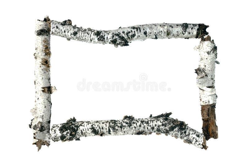 Moldura para retrato isolada da foto do ramo de árvore do vidoeiro imagem de stock