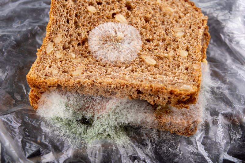 Moldy σάντουιτς με το καπνισμένο κρέας σε μια πλαστική τσάντα Σκοτεινό ψωμί με τα σιτάρια που καλύπτονται με την άσπρη φόρμα στοκ εικόνες