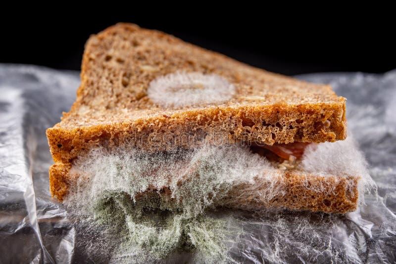 Moldy σάντουιτς με το καπνισμένο κρέας σε μια πλαστική τσάντα Σκοτεινό ψωμί με τα σιτάρια που καλύπτονται με την άσπρη φόρμα στοκ φωτογραφία
