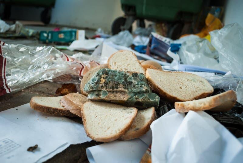 Moldy ψωμί στα απορρίμματα στοκ φωτογραφίες