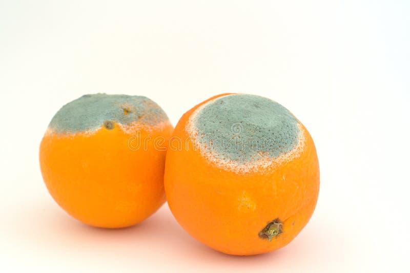moldy померанцы 2 стоковая фотография rf