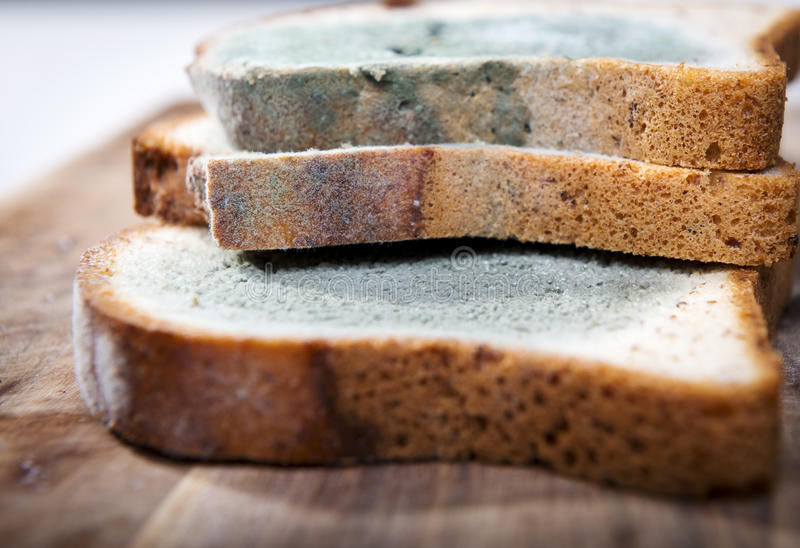 Moldy Bread. Mold growing rapidly on moldy bread in green and white spores stock image