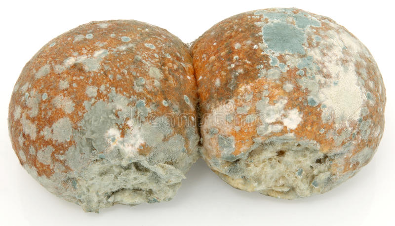 Moldy Bread Rolls royalty free stock images