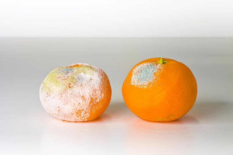 A moldy orange. Isolated on a white background stock photo