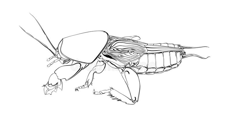 Mole cricket. Insect on a white background. Silhouette of a beetle. Vector illustration vector illustration