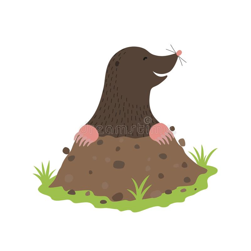 Mole Digging Out of the dirt animal cartoon character royalty free illustration
