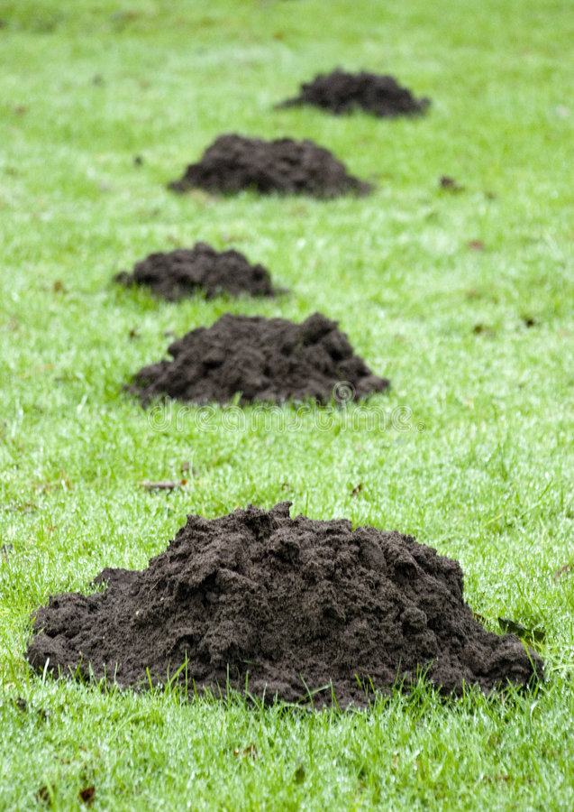 Download Mole hill stock photo. Image of green, trace, parasit - 5575488
