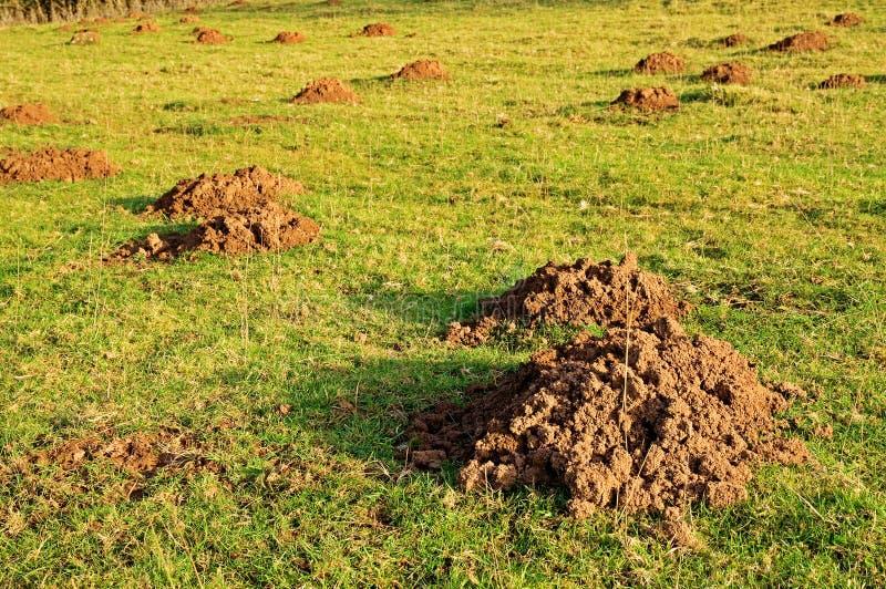 Mole Hills Royalty Free Stock Photography