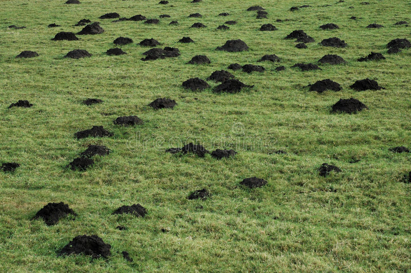 Mole hills stock images
