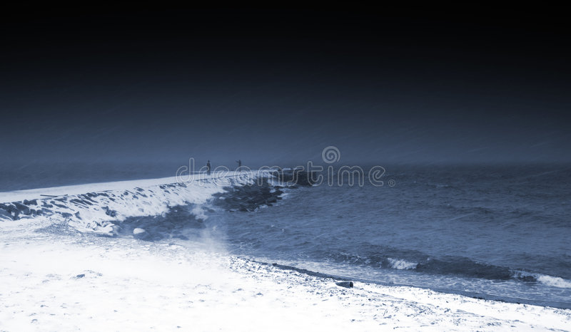 Mole at snowy and windy weather royalty free stock image