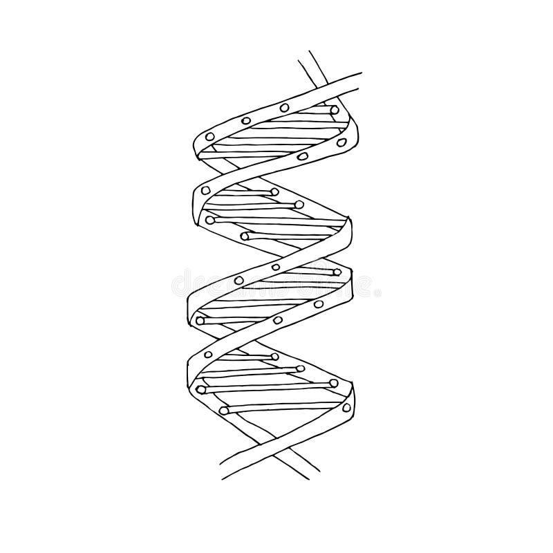 Molecola del DNA Schema a spirale del DNA Illustrazione monocromatica di vettore delle azione dell'icona di progettazione royalty illustrazione gratis