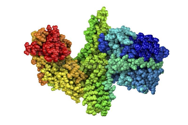 Moleculair model van botulinum neurotoxine royalty-vrije illustratie