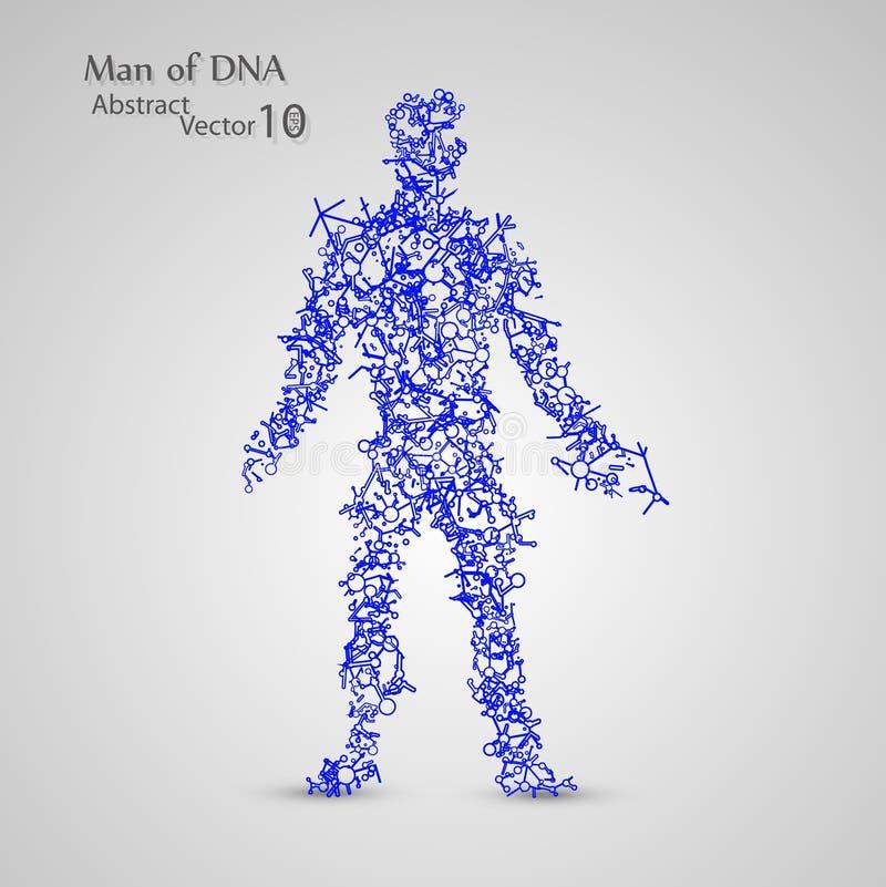 Moleculaire structuur in de vorm van de mens royalty-vrije stock afbeeldingen