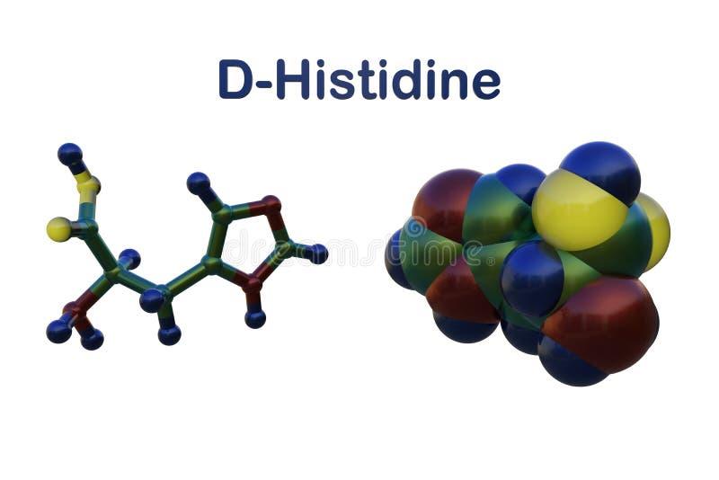 Molecular structure of d-histidine, an optically active form of histidine havind D-configuration. It is used in the. Molecular structure of d-histidine, an stock illustration