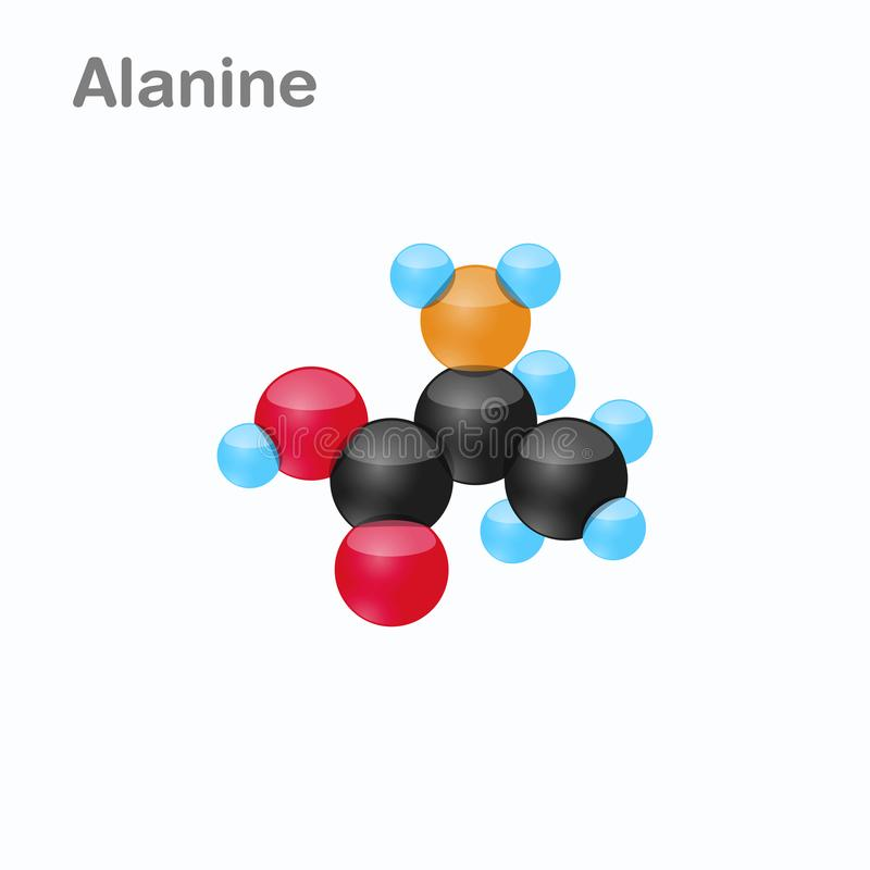Molecule of Alanine Ala an amino acid used in the biosynthesis of proteins Vector Illustration, isolated. Molecule of Alanine Ala an amino acid used in the vector illustration