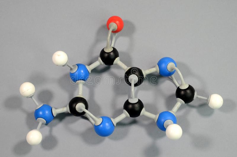 Molecule model of the DNA element Guanine. Black is Carbon, Red is Oxygen, White is Hydrogen, Blue is Nitrogen royalty free stock images