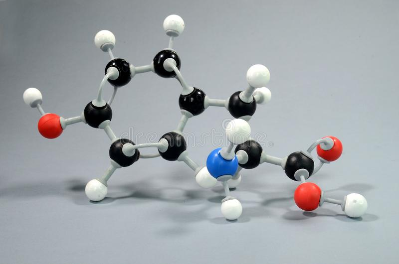 Molecule model of 4-hydroxyphenylalanine, a common amino acid. Black is Carbon, Red is Oxygen, white is Hydrogen, Blue is Nirogen stock images