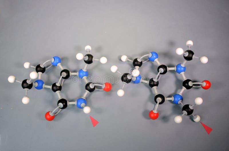 Molecule-Modelle von Theobromin links und Koffein rechts Der rote Pfeil hebt den einzigen Unterschied hervor Weiß stockfotografie