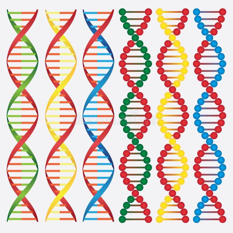 Molecules of DNA.
