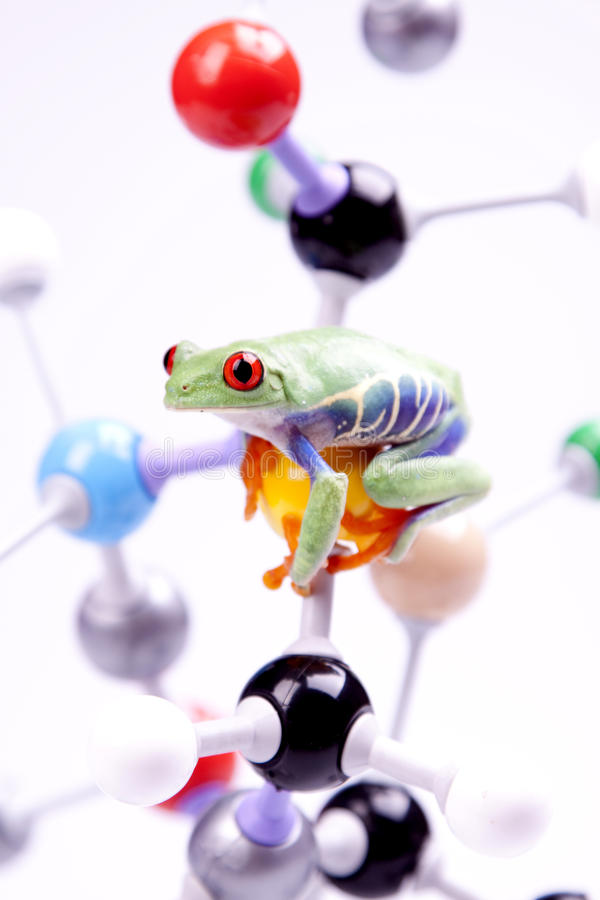 Molecules en kikker stock afbeeldingen