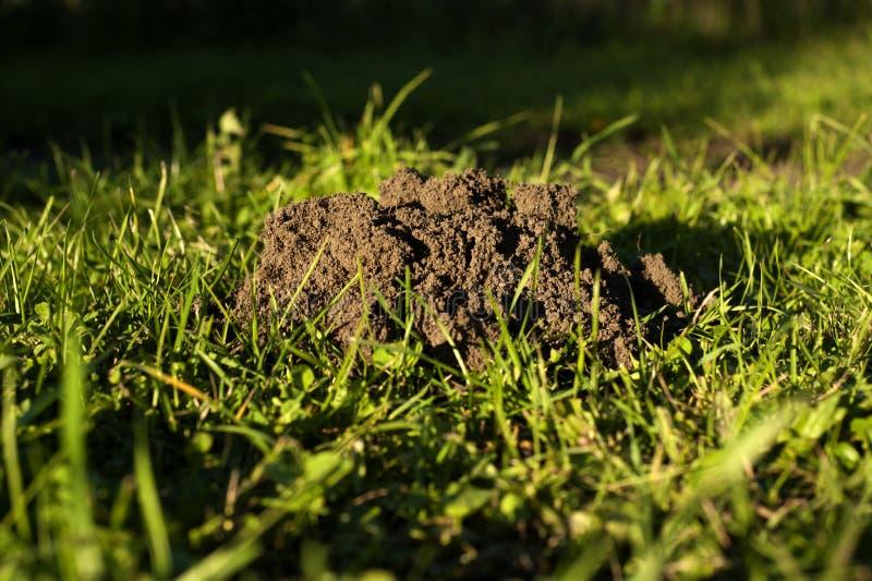 molehill стоковые фото