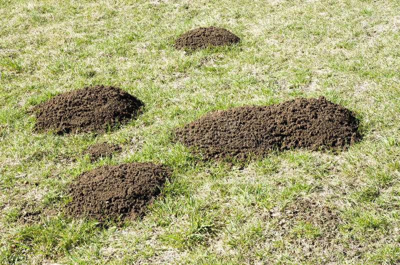 Molehill on green field in spring royalty free stock image