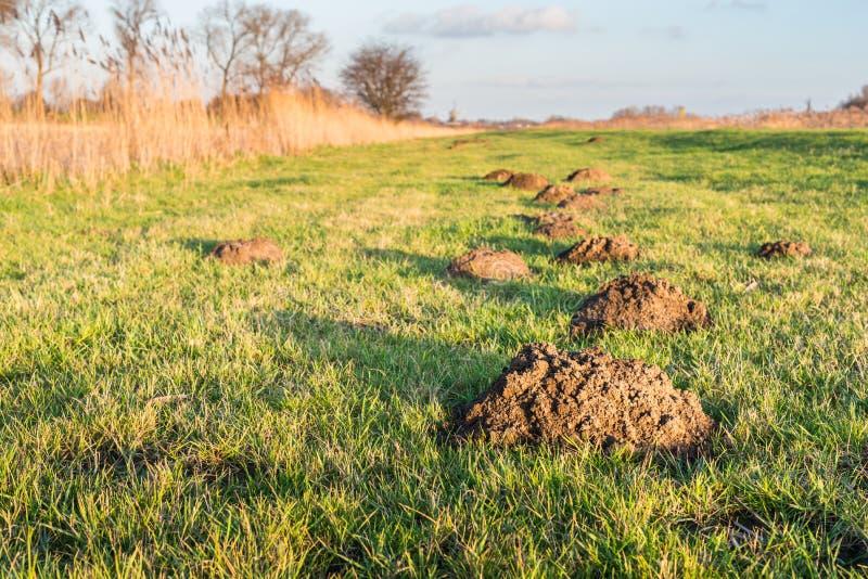 Molehills στο χαμηλό φως του ήλιου στοκ φωτογραφίες με δικαίωμα ελεύθερης χρήσης
