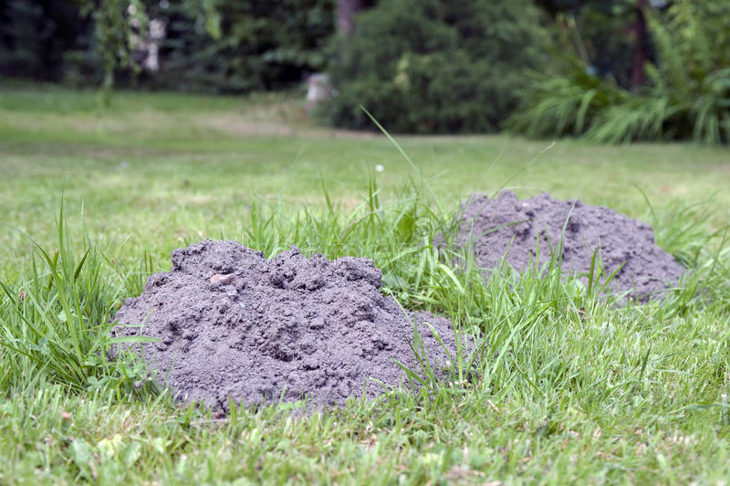 molehills στοκ εικόνα με δικαίωμα ελεύθερης χρήσης