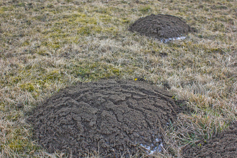 molehills στοκ εικόνα