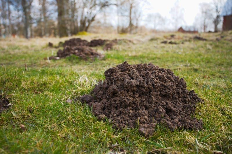 molehills foto de stock royalty free