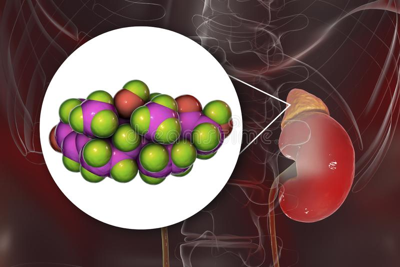Molekuła cortisol hormon i adrenal gruczoł royalty ilustracja