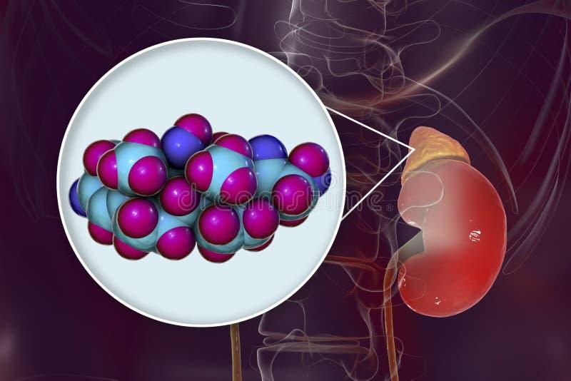 Molekuła cortisol hormon i adrenal gruczoł ilustracji