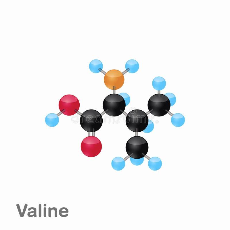 Molekylär omposition och struktur av Valine, Val som, är bästa för böcker och utbildning royaltyfri illustrationer