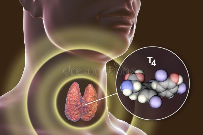 Molekyl av sköldkörtelhormonet T4 royaltyfri illustrationer