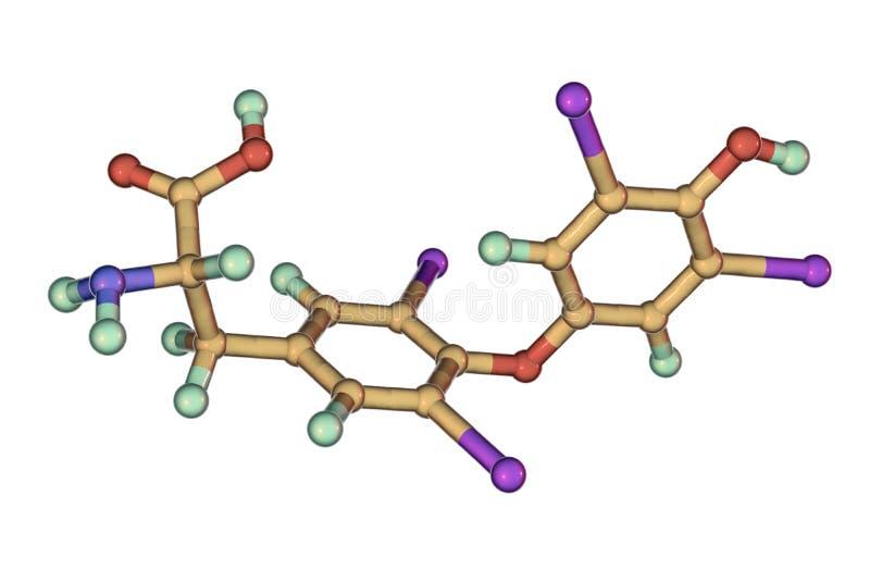 Molekyl av thyroxine, en sköldkörtelhormon royaltyfri illustrationer