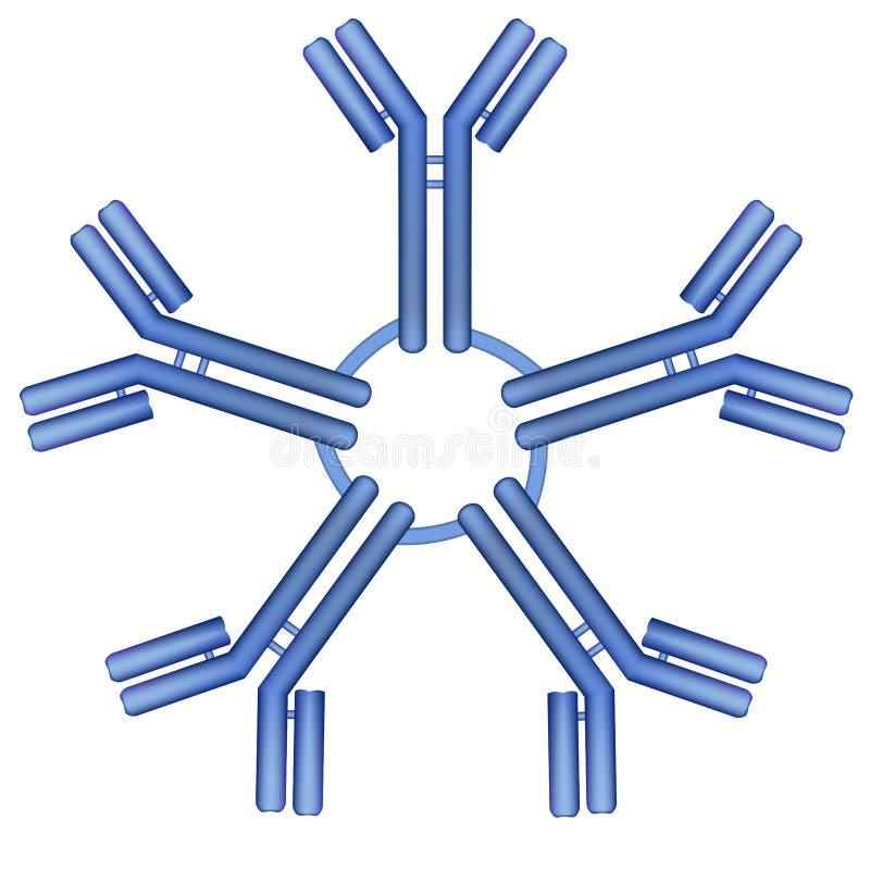 Molekyl för IgM antikropppentamer royaltyfri illustrationer
