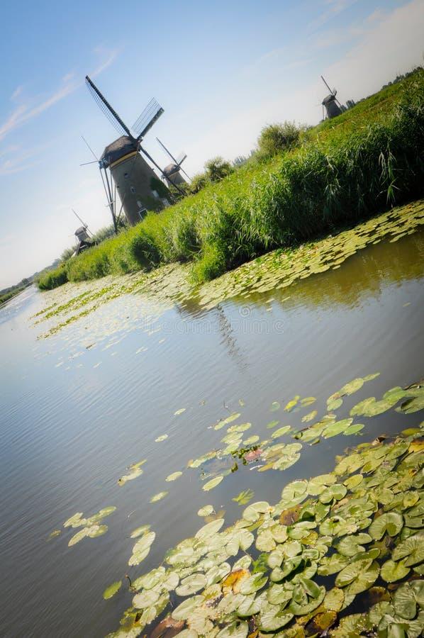 Molens en Waterlelies in Kinderdijk royalty-vrije stock foto